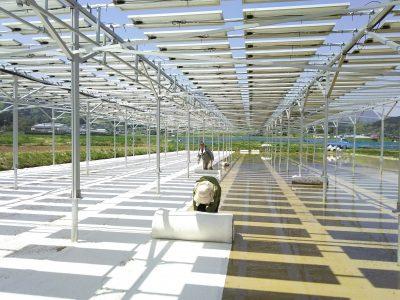 【9月25日:佐久】「ソーラーシェアリング(営農型太陽光発電)」説明会を開催