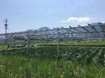 【9月19日:松本】農地を活かしながら営農型太陽光発電 ソーラーシェアリング 実例を聞く 説明会